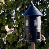 vogel voeder tuin