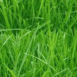 Fietskussen gras_