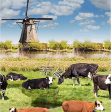 45x140cm Restje tafelzeil koe en molens
