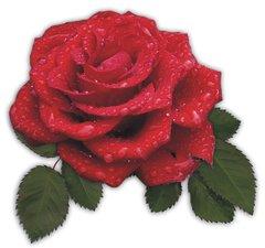 Tegelsticker roos rood 15x15cm