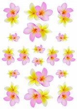 Fietsstickers kelk bloempjes roze geel