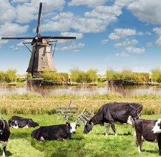Ovaal tafelzeil koe en molens