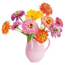 Raamsticker flat flowers zinnia
