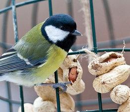 Vogelvoer doppinda's 1kg