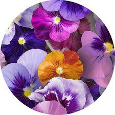 Groot rond tafelzeil viooltjes (160cm)