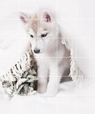 Foto tegelsticker 15x15 'husky pup' 90x75 cm hxb
